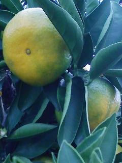 橙に色づく街に秋肥ゆる
