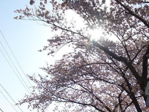 燕舞い桜咲く路古作の辻