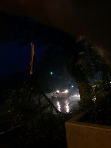 千葉県船橋市!台風猛威で折れた桜の木