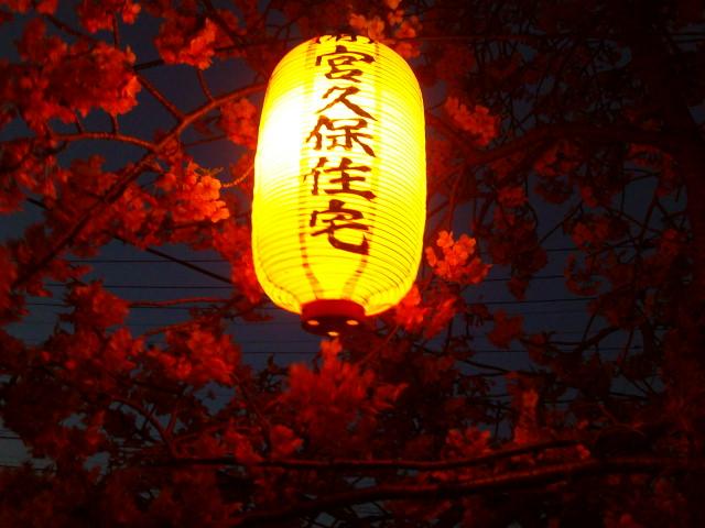 夜桜で焦がれた河津桜愛で